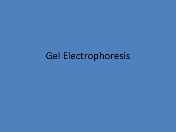 Preview of Gel Eletrophoresis