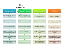 Preview of Gene expression in eukaryotes