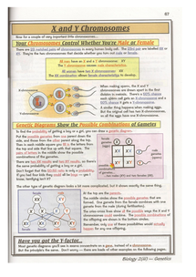 Preview of B2 Biology AQA - Genetic Diagrams CGP