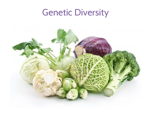 Preview of Genetic Diversity