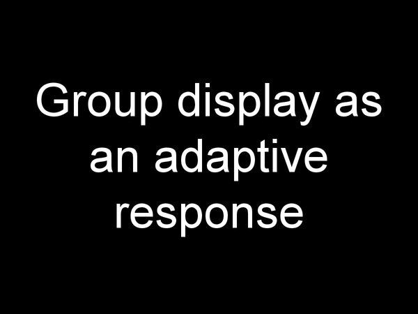 Preview of group display as an adaptive response