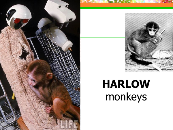 Preview of Harlow monkeys