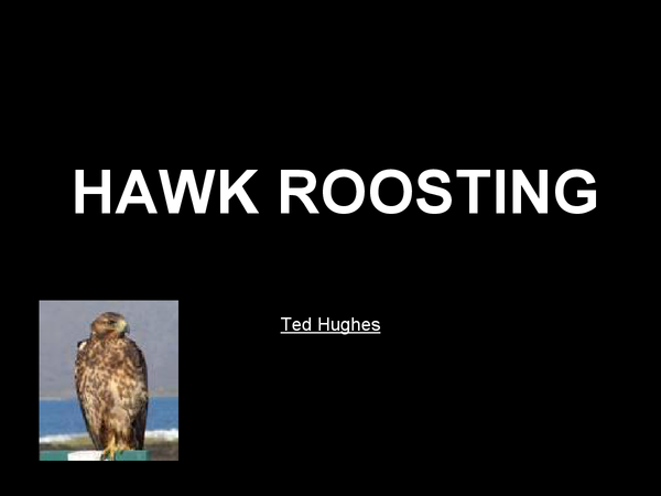 Preview of Hawk Roosting