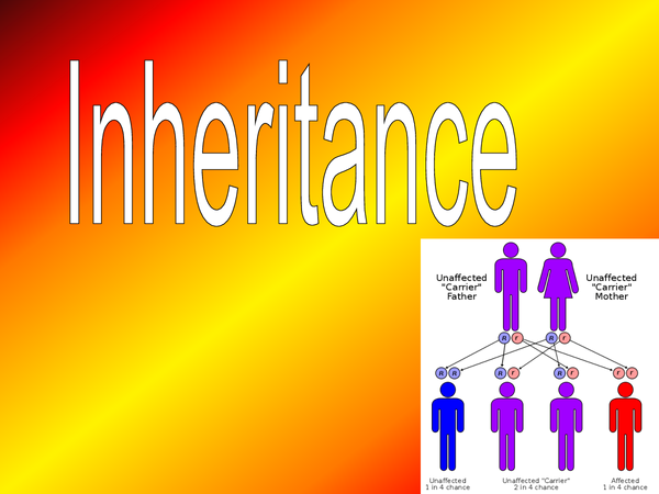 Preview of HBIO4 Chapter 2 Inheritance