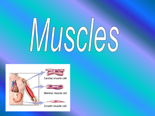 Preview of HBIO4 chapter 6 Muscles