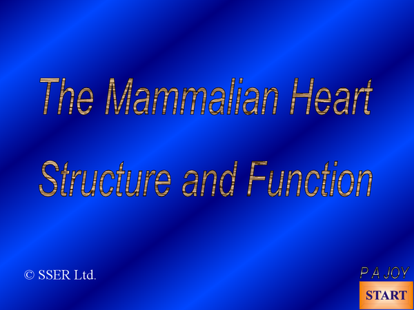 Preview of Heart and Circulation Powerpoint