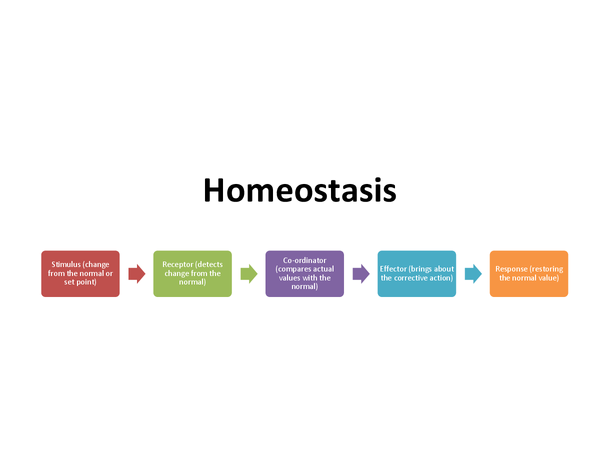 Preview of Homeostasis and control of body temperature and glucose levels