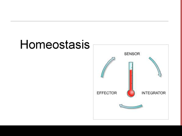 Preview of Homoestasis ppt