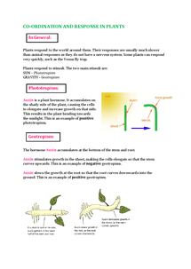 Preview of IGCSE Biology Double Award Co-ordination and Response in Plants Notes