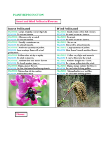 Preview of IGCSE Biology Double Award Plant Reproduction Notes