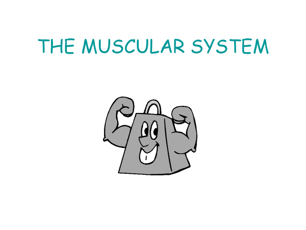 Preview of Jack Hunt School: Muscular system