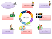 Preview of Life cycle of the family