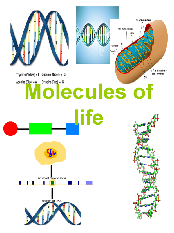 Preview of Molecules of life, B3a