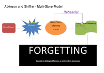 Preview of Multi-Store Model Diagram