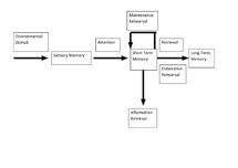 Preview of Multi- Store Model of Memory Diagram