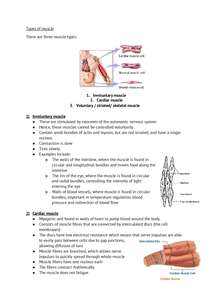 Preview of Muscle revision - Biology OCR F215 module 4