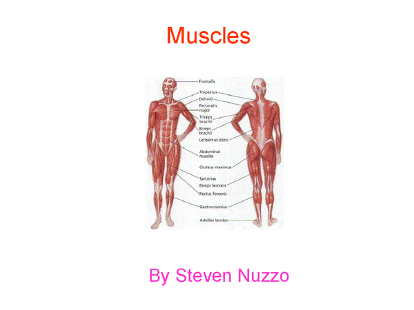Preview of muscles