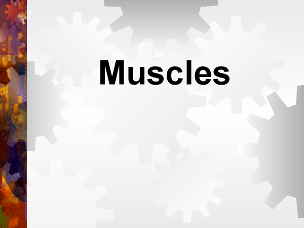 Preview of Muscles ppt