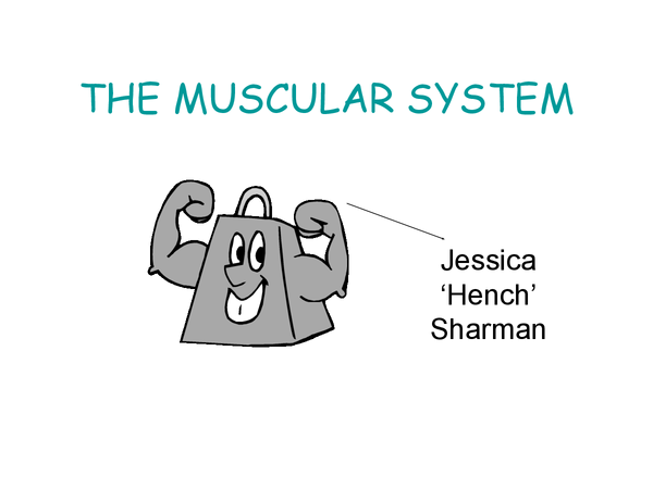 Preview of Muscular system GCSE JackHunt.