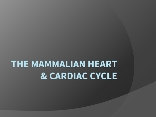Preview of My powerpoint presentation on the cardiac cycle