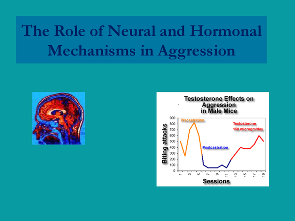 Preview of Neural and Hormonal - Aggression A2 Psychology