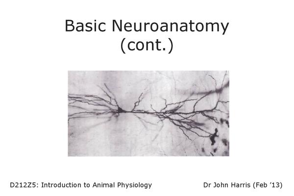 Preview of Neuroanatomy