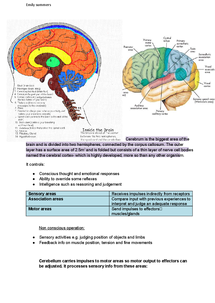 Preview of OCR A2 Biology 2.4.5 the Human brain