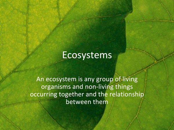 Preview of OCR A2 BIOLOGY ECOSYSTEMS POWERPOINT