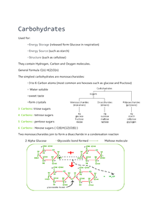 Preview of OCR AS Biology- Carbohydrates