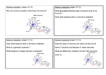 Preview of OCR Biology F214 - Communication and Homeostasis Revision Cards