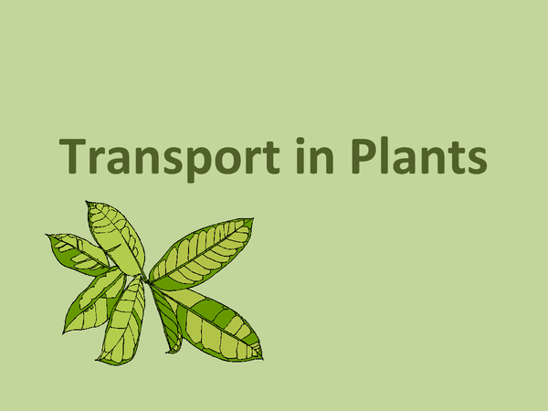 Preview of OCR Biology: Transport in Plants Powerpoint