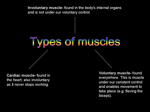 Preview of OCR- Muscles