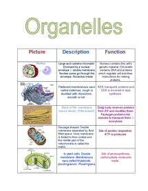Preview of OCR Biology Organelles Table