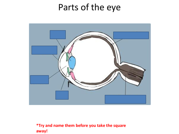Preview of Parts of the Eye powerpoint