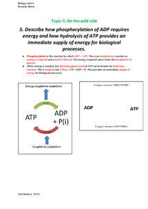 Preview of Phosphorylation and ATP
