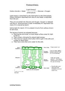 Preview of Photosynthesis - AQA GCSE Biology Additional