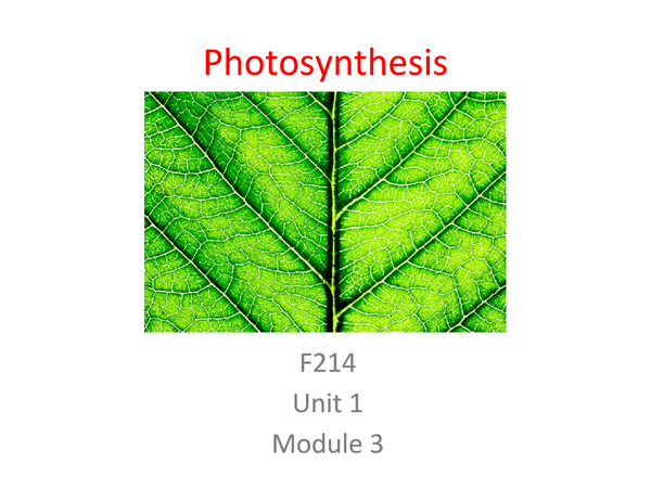 Preview of Photosynthesis Unit 1 Module 3 Revision