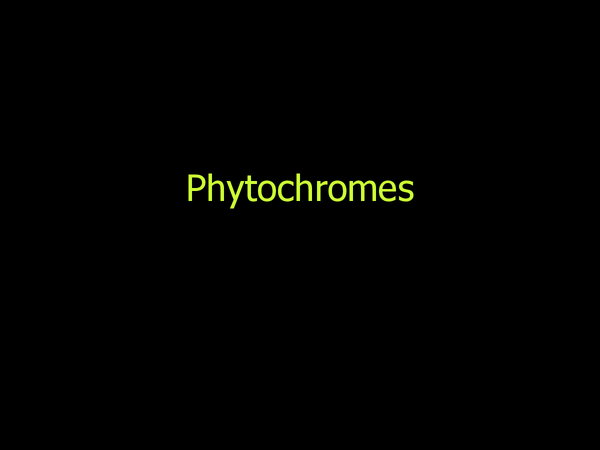 Preview of phytochrome and long/ short day plants