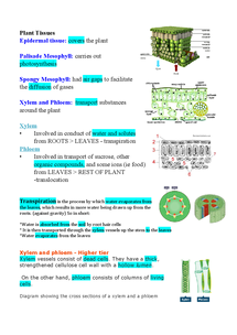 Preview of Plant Tissues, Transpiration and Xylem and Phloem Notes