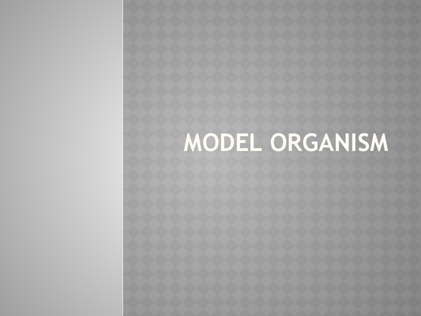 Preview of presentation of model organism, lipids and stoke