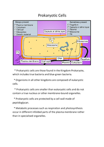 Preview of Prokaryotic Cells