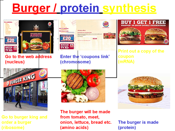 Preview of Protein synthesis