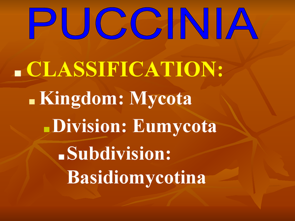 Preview of PUCINIA FUNGUS
