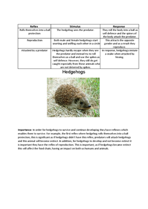 Preview of Reflex of Hedgehogs