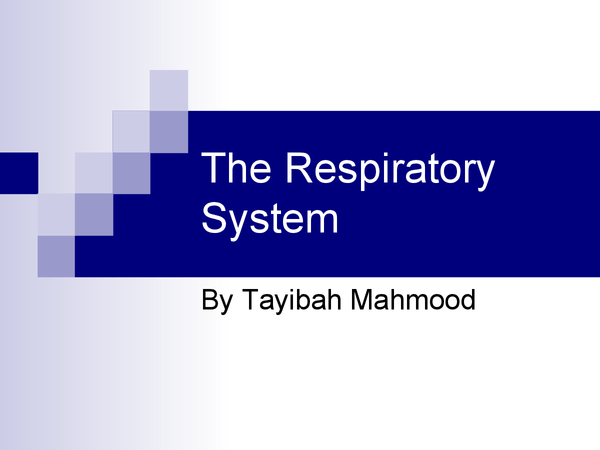 Preview of Respiratory System, Jack Hunt