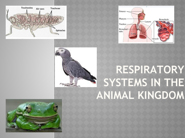 Preview of Respiratory systems in the animal kingdom :D