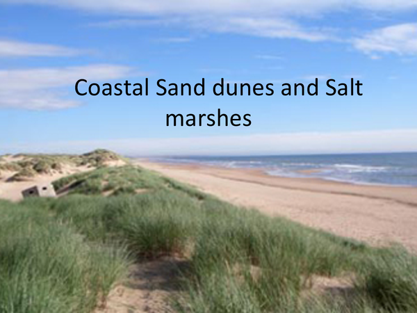 Preview of Sand Dunes & Salt Marshes