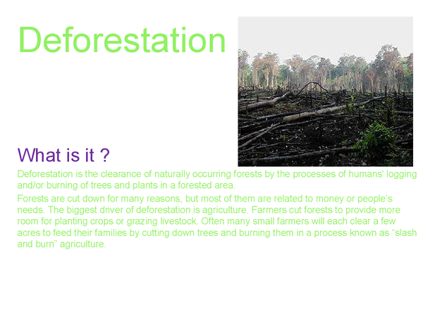 Preview of science deforestation powerpoint