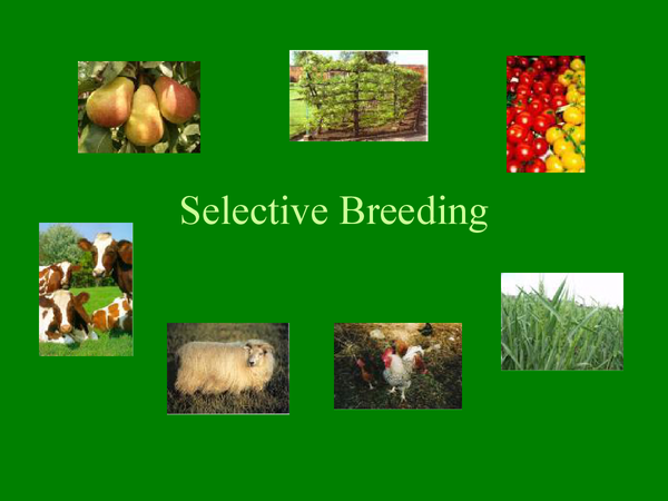 Preview of Selective Breeding