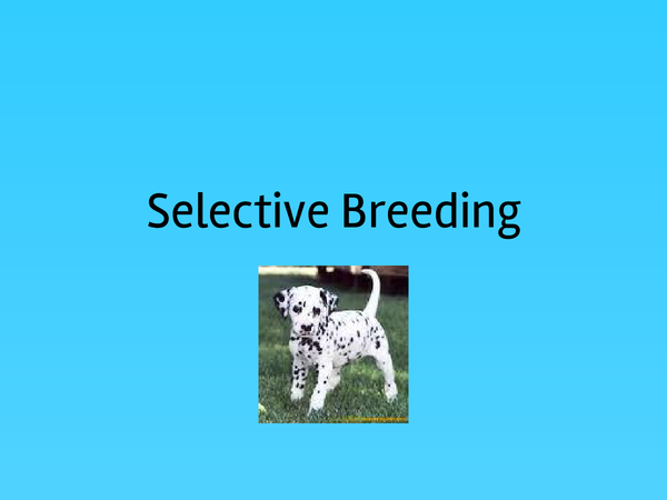 Preview of Selective Breeing